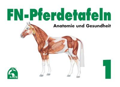 FN-Pferdetafeln Set 1 (Anatomie und Gesundheit)