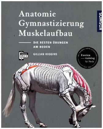 Higgins, Gillian:Anatomie, Gymnastizierung, Muskelaufbau
